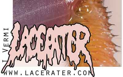 Lacerater Interview